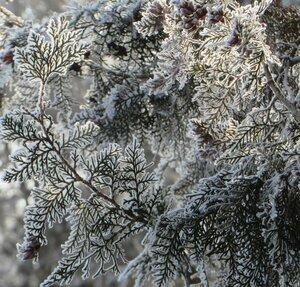 Зимние ажуры